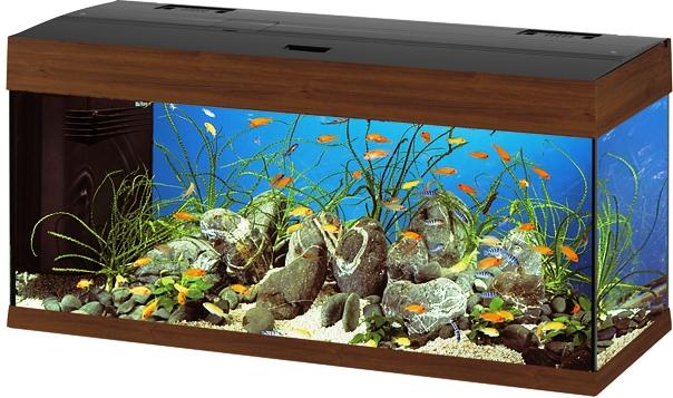 Leggi la discussione annunci e 39 vita for Decorazioni acquario